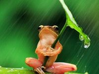 FROGS my Favorite