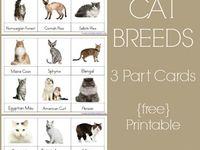 preschool - pets