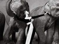 DoViMa's Elephants / Dovima, Fashion, Supermodel, 20th century