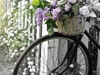 Rowery i kwiaty