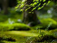 Green / Vert