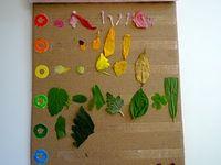 Nature Education