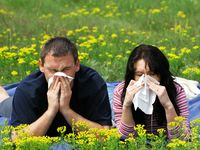 Seasonal Allergies / Allergy symptoms include itchy eyes and skin, sneezing, nasal congestion, wheezing, and rash. Seasonal allergies result from grass, weed, tree pollen, or molds. Cat and dog dander allergies are common. Food allergies include peanut or milk.