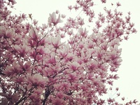 Trees(all kinds) shrubs.bushes etc. on Pinterest   Weeping Willow ...