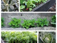 Growing vegatables