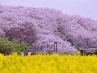 Japan_Kanto