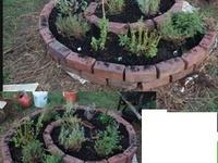 garden: herbs...
