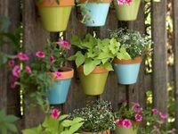 Home - Jardin / Garden