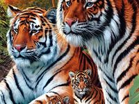Pin By Vignesh Sandhiya On Tiger Pictures Tiger Pictures Hidden Images Animals