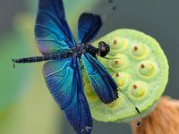 Birds, Blooms, Butterflies & Bugs