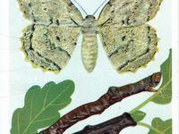 wildlife illustration inspiration