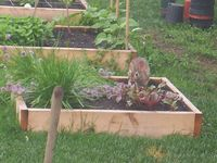 7 best images about rabbit proofing on pinterest gardens cayenne peppers and vegetable garden for How to deter rabbits from garden