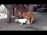 Youtube Animals Horses Dot Hack