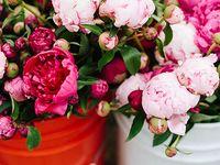 Beautiful, beautiful flowers