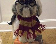 All things Harry Potter!!