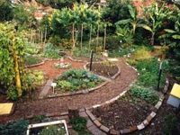 Permaculture & Gardening