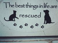 Rescuing One Cat Won T Change The World But It Will Change The