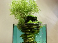 I have a 10-, 15-, and 30-gallon fish tanks on a budget, and dream of fully planted tanks like those pinned here. And there's some cute fish
