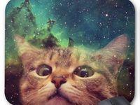 cat / cat,tabby,calico,love,heart,ocher,cute,fun,kawaii