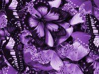 Purple & Lilac Pleasure
