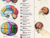 1000 images about post concussion syndrome what is it for Fish oil concussion