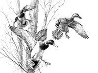 Mallard Duck Coloring Pages Animal Illustration Art Animal