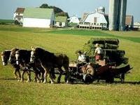 Amish Simple Life