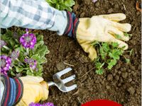 Gardening& Outdoor Ideas