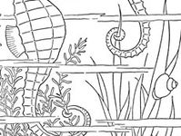 1808 Best A Coloring Book Pages Cats Geckos Chameleon And Fish