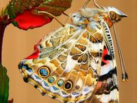 BEAUTIFUL BUTTERFLY, INSECTS & MOTHS