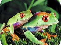 Frogs are notable for their ability to move between worlds. They live in water and on land.  Witches share these traits, traveling freely in the mundane world and in the spiritual world. And Witches become much more than the animal we were born.