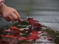 Hojas / Hojas de arboles, hojas secas, hojas de colores, hojas de primavera, hojas de otoño