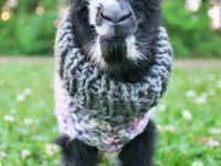 Favorite Farm Animals