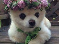 lindos cachorrinhos