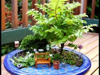 Mini Gardens/Fairy Gardens