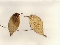 Materiali trovati in natura - Legni, foglie, pigne, sassi ecc.