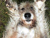 Osttirol Austria Animals Cute Animals Forest Animals