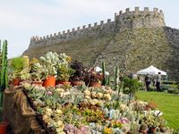 Fiori nella Rocca / Mostra mercato di piante e fiori rari