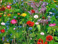 Bloemen en decoraties