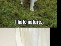 Animals being funny