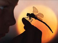 :: Dragonfly ::