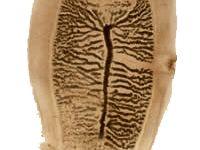 paraziti societys 1753 rar