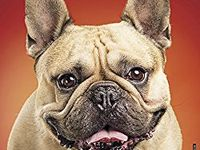 French Bulldog Calendars 2018 / Do you know someone who loves Frenchies? One of these French Bulldog calendars would make a great gift just for them!