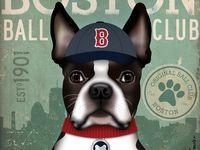 All Things Boston Terrier!