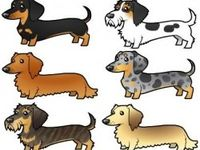 Dachshunds - I just can't get enough!