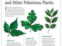 17 Best Images About Poison Ivy And Other Poisonous Plants