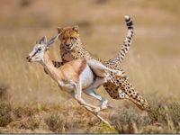 93 Ideas De Cazando A La Presa Hunting Animales Fotografía Animal Animales Salvajes