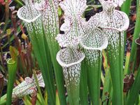 Plants that can handle zone 4 weather