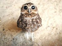 Owls are just so cute