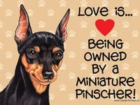 My min pin, Noelle, was my baby for over 9 years.  To me she was the most precious dog in the world.  I lost her, then got my Gracie Rose, and lost her in only 2 1/2 months.  Now I have a rescue Min Pin, Rosie.  She is a wonderful girl!
